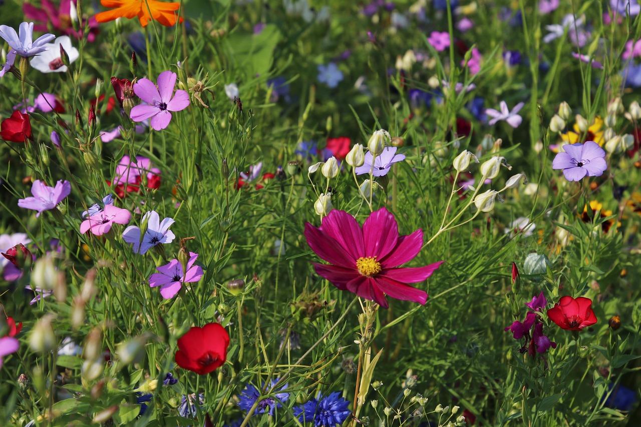 meadow grass plants flowers