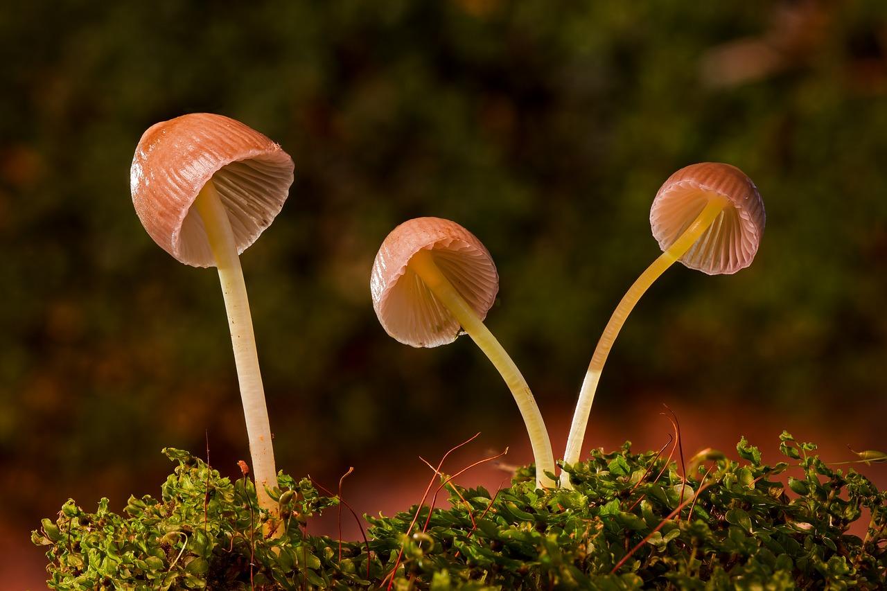 mushroom view