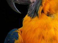 1080x2280 parrot wallpaper
