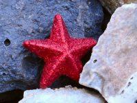1080x2280 star fish Wallpaper