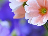 Beautiful Flowers Wallpaper 1080x2280
