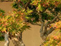 Earth Bonsai 4K Wallpaper Wallpaper 1080x2280