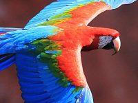 Macaw Wallpaper 1080x2280
