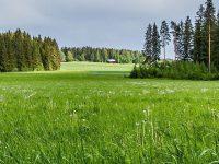 Meadow Forest Sunny Grass Wallpaper 1080x2280