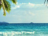 Tropical Wallpaper hd 1080x2280