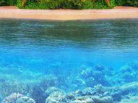 Underwater Wallpaper 1080x2280