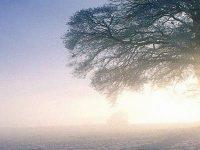 Winter Snow Sun Wallpaper 1080x2280